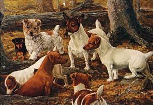 Jack Russell Terrier bei der Jagd
