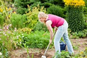 Meinen Jack Russell Terrier im eigenen Garten vergraben. Worauf muss ich achten?