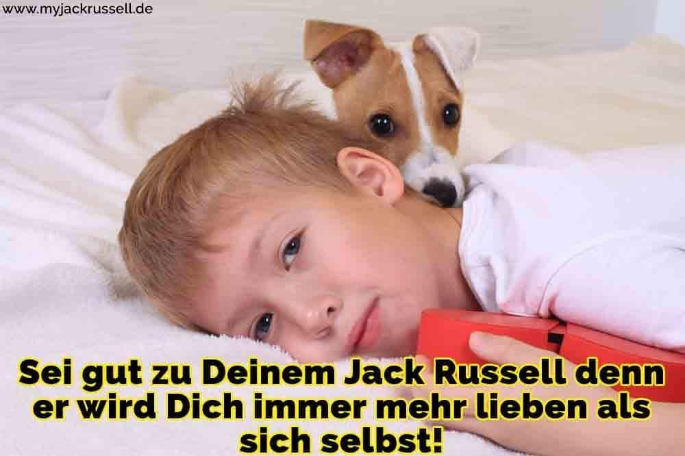 Ein Jack Russell im Bett mit einem Jungen