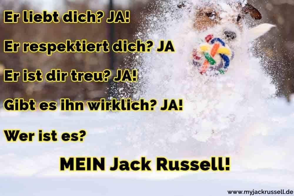 Ein Jack Russell spielt im Schnee