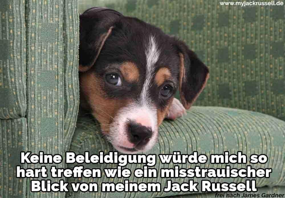 Ein Jack Russell auf dem Sofa