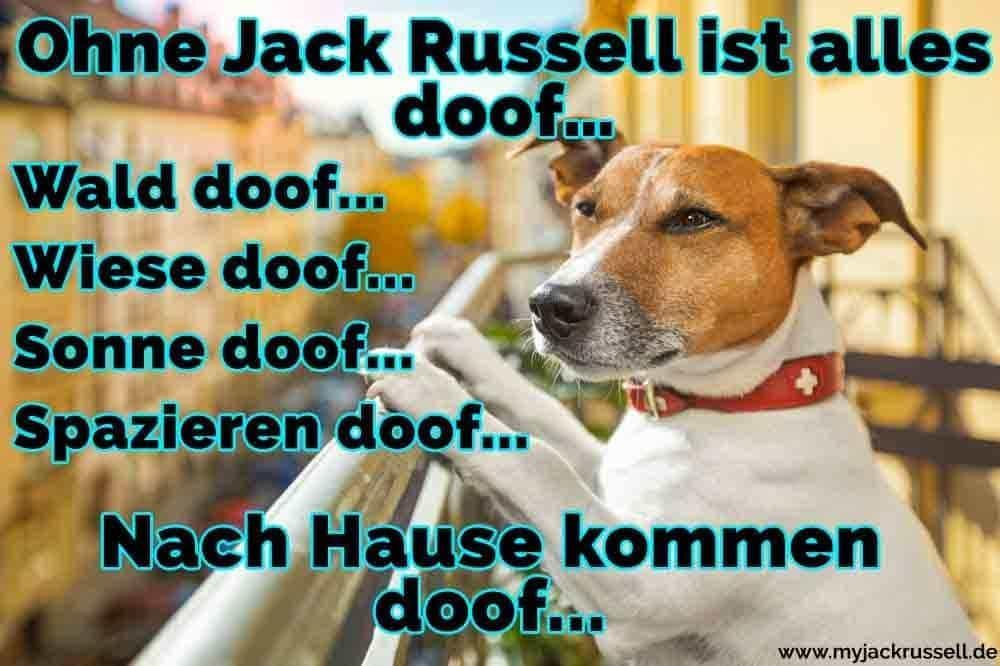 Ein Jack Russell auf dem Balkon