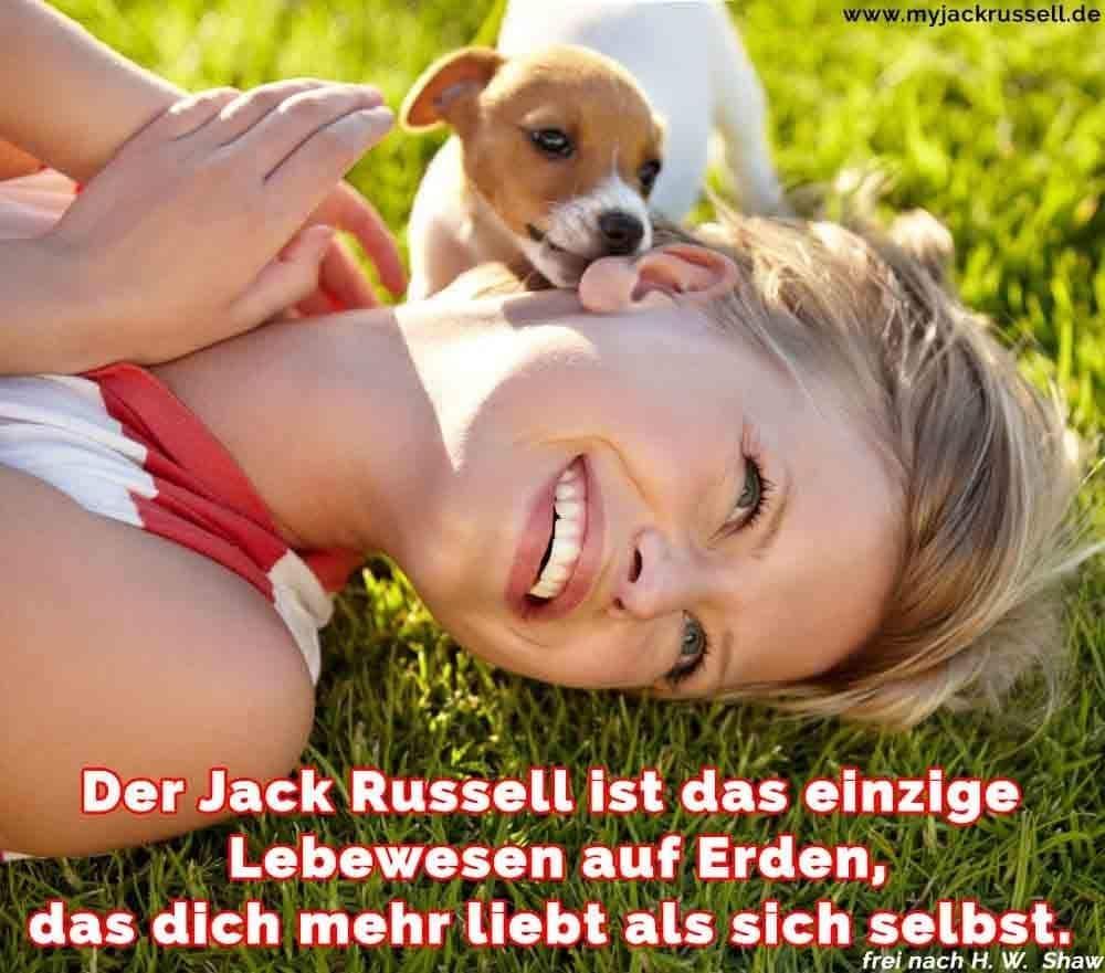 Ein Jack Russell das Gesicht einer Frau leckt