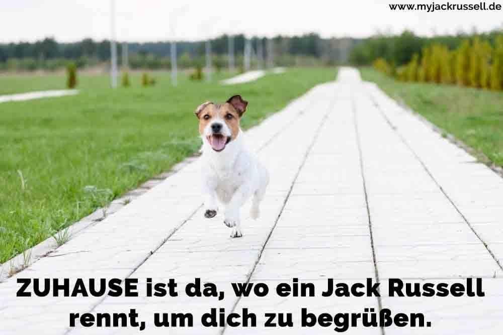 Ein Jack Russell laufen auf dem Bürgersteig