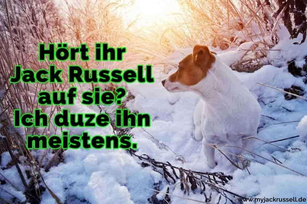 Ein Jack Russell im Schnee