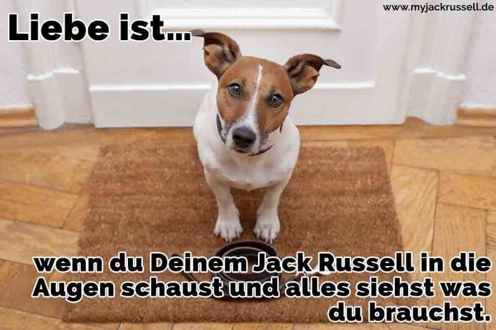 Ein Jack Russell wartet an der Tür seines Besitzers