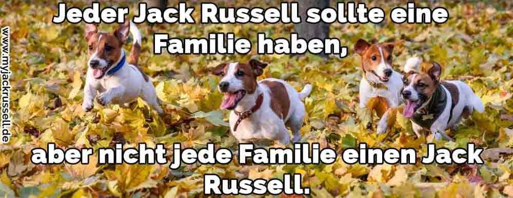 Ein Jack Russell laufen in den Herbstblättern