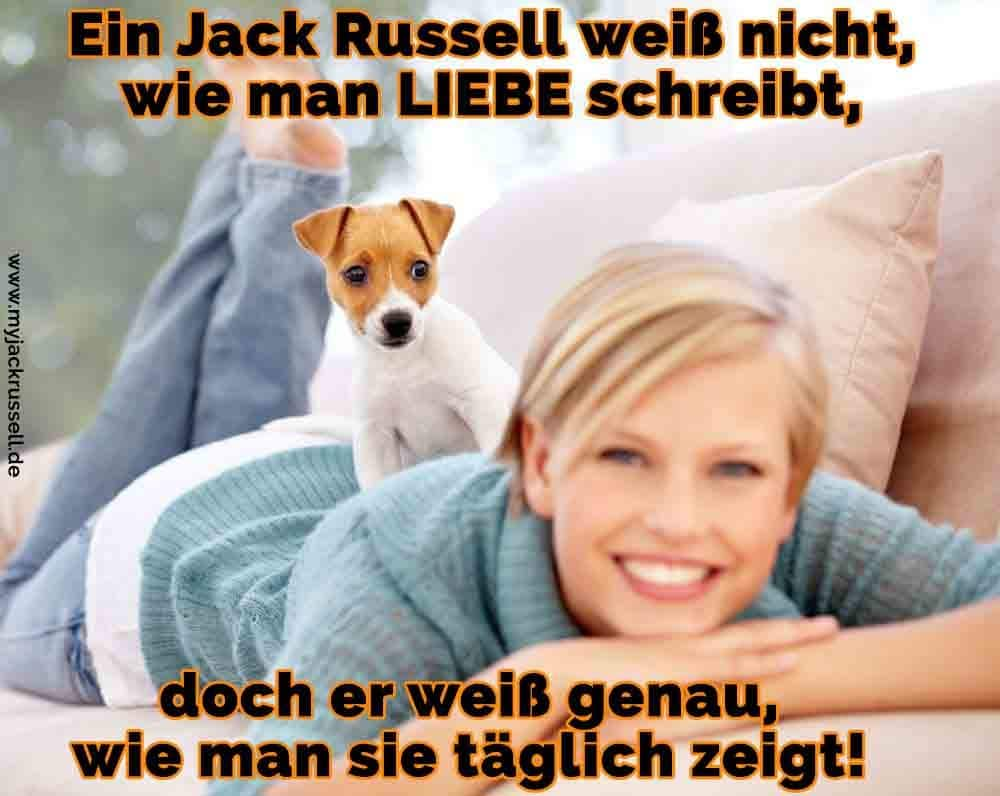 Ein Jack Russell macht ihren Besitzer Massage