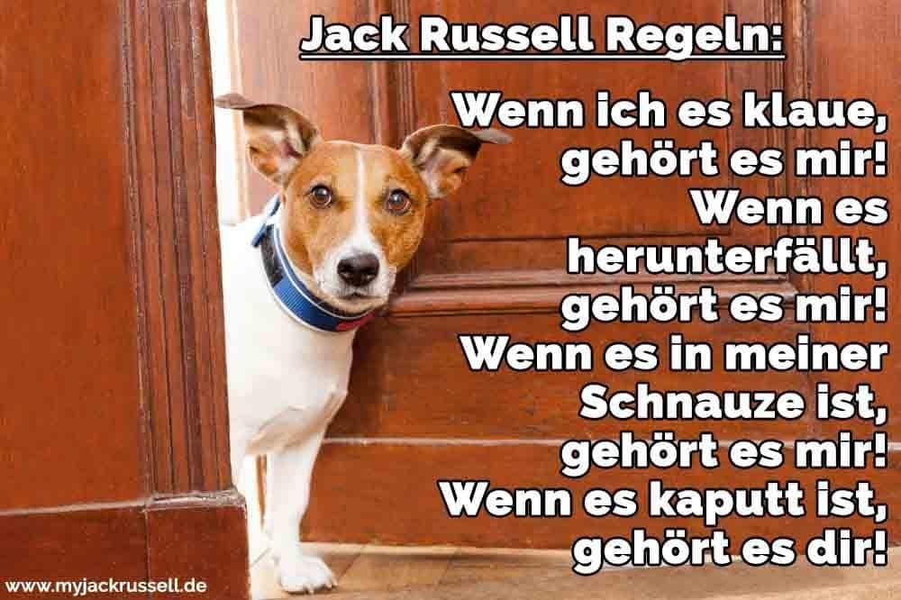 Ein Jack Russell an der Tür