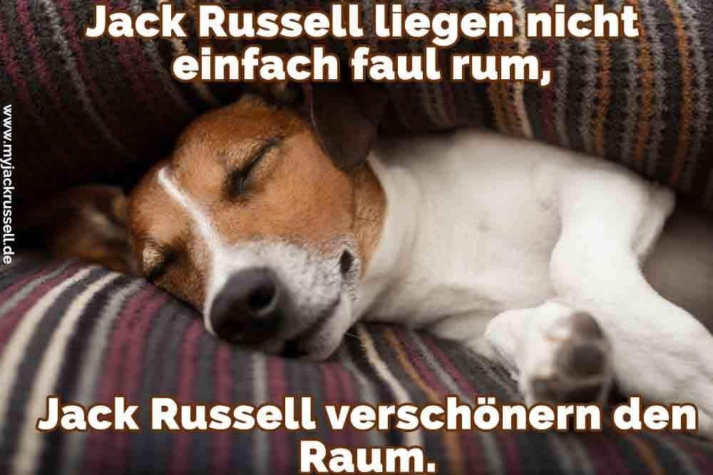 Ein Jack Russell schläft auf dem Sofa