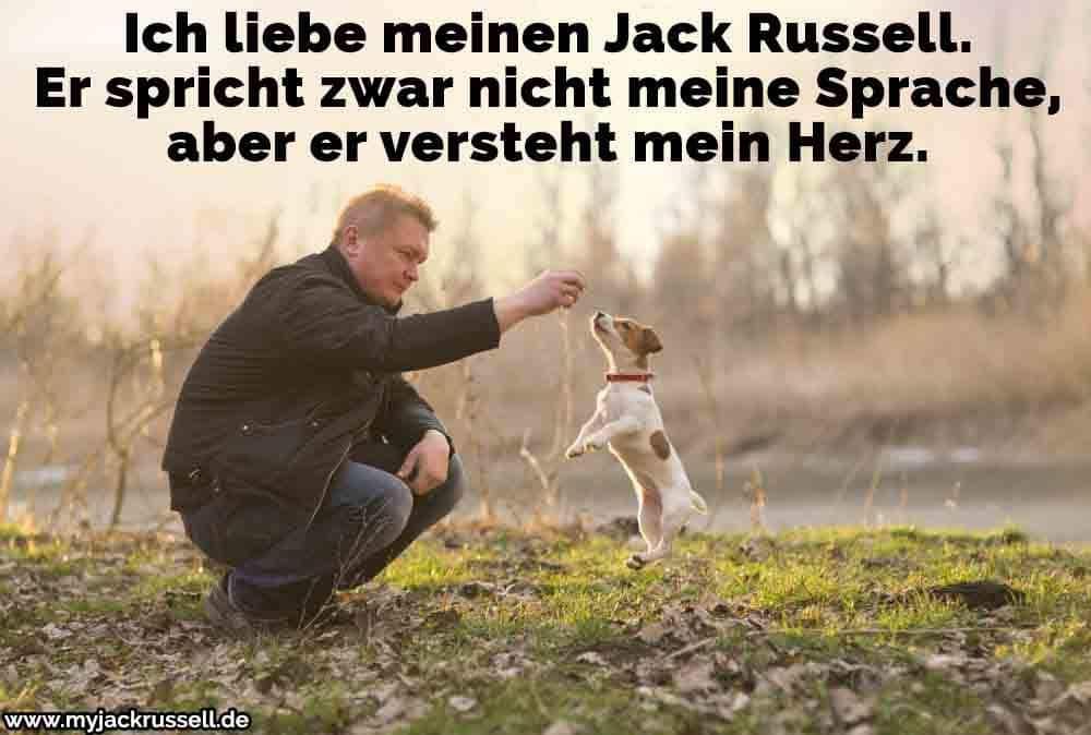 Ein Mann spielt mit seinem Jack Russell im Park