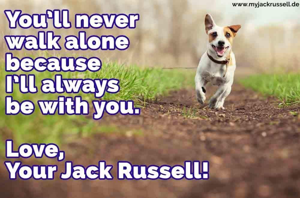 Ein Jack Russell im Park