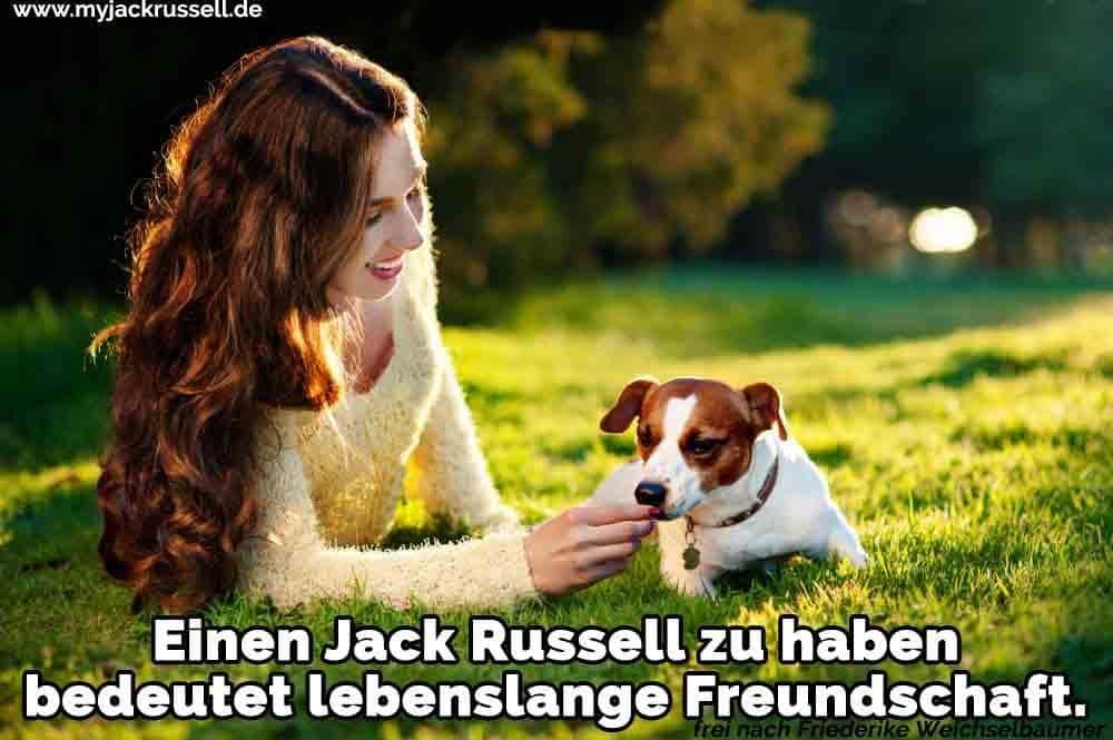Eine Frau füttert ihr Jack Russell