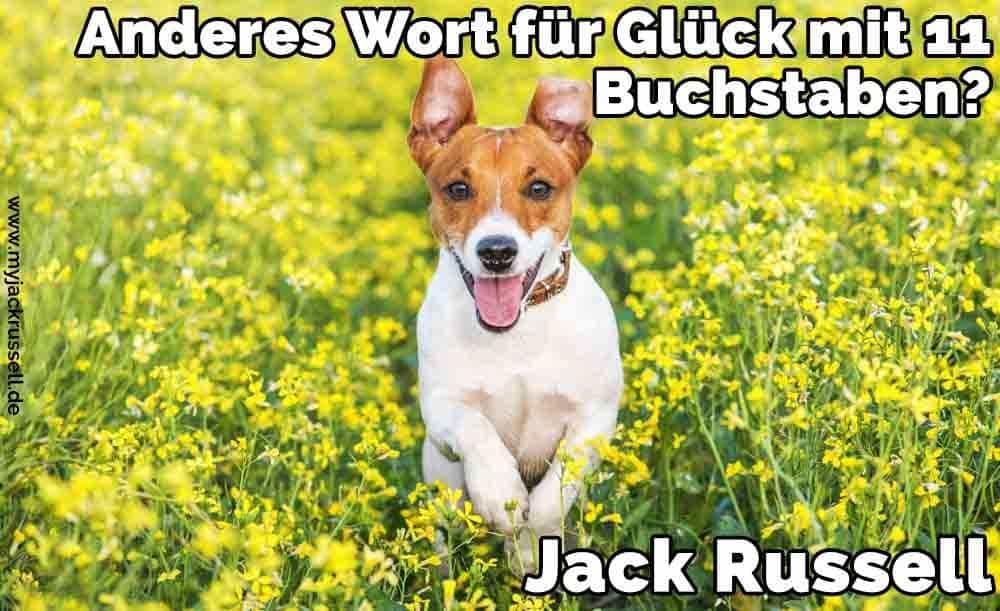 Ein Jack Russell in der Mitte der Blumen